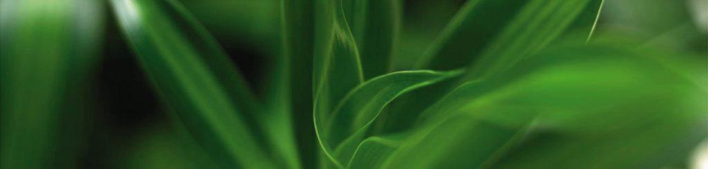 Pflanzenpflege 2