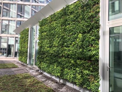Baum und Raum - Außenwände