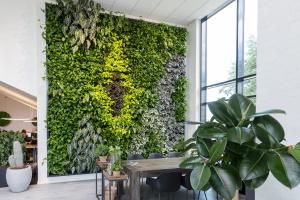 Baum und Raum - Innenwände